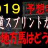 北海道スプリントカップ(門別競馬)2019予想|あの地方馬はどうだ!